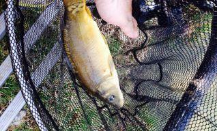 GAM S.n.c. | Pescare sul Terdoppio